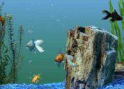 Vendo peces de agua fria