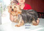 Criadero von huett pastores alemanes hotel peluqueria canina