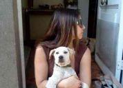 Cachorro mezcla labrador blanco, precioso y regalón