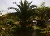 Venta de palmera canaria
