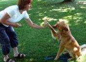 Manual de adiestramiento canino