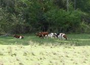 Vendo campo agrícola ganadero villarrica loncoche km 9 de 6.75 has
