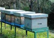 Vendo cajones para abejas con marcos