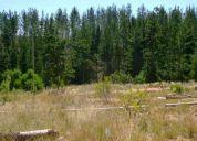 Terreno la foresta de curauma 535 m2 (37tk)