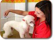 Peluqueria canina wow ! guau 10 años de experiencia el abrazo de maipu