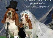Fotografia de matrimonios  quilpue  v. alemana