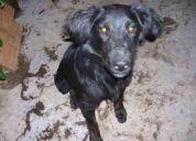 Regalo perro poodle y perra mediana esterilizada