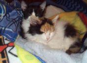 Gatitos en adopcion siempre