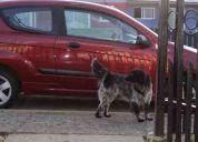 Se regala perro sin hogar.