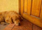 perrito perdido