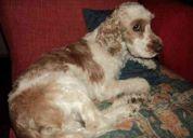 Busco a mi perro perdido