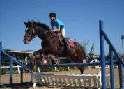 Equitacion, clases de   salto, adiestramiento, varios niveles.