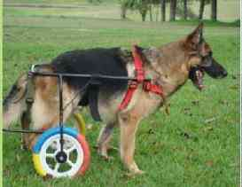 Carro Ortopédico Perro Grande