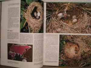 Revistas El Mundo de los Animales