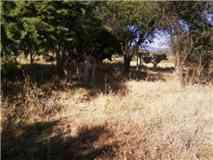 campo vendo .35.5 hectáreas