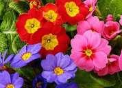 Terapia flores de bach especialidad en niños y adolecentes -  reiki