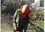 Poda y tala de arboles presupuesto gratis  72789523