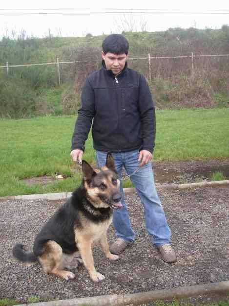 busco a hembra pastor aleman para cruza con mi perro pastor.