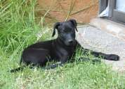 Lindos cachorros buscan hogar que los adopte
