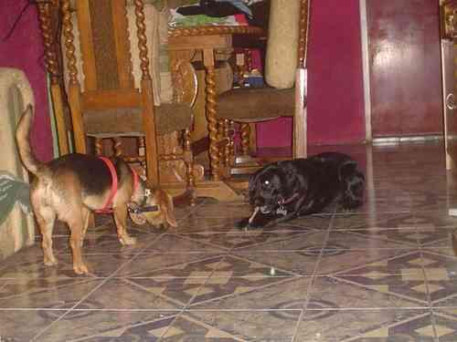 Guardería, Hotel de mascotas (casa)