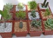 Cactus para souvenir de matrimonio