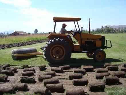 Productor Pasto natural alfombra en palmetas rollo Chicureo Colina Huechuraba Batuco Colina Quilicur