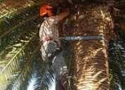 Corte de palmeras,y arboles