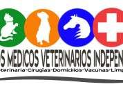 servicio medico veterinario