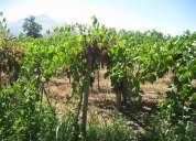 Escobar propiedades vende terreno agricola san esteban $ 0.4 uf metro inversión