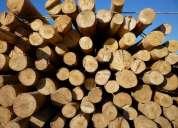 Eucaliptus, varas, postes, troncos, rollizos