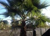Vendo palmera