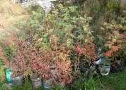 Arbolitos vendo, aclimatados listos para plantar!