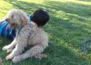 Perdi mi cachorro jugueton