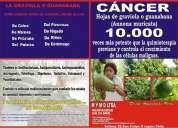 Venta hojas de graviola o guanabana (annona muricata)