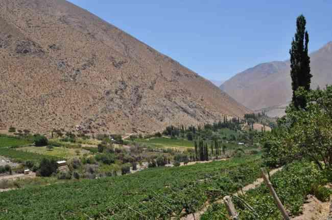 Vendo parcela valle elqui 5000 mts2 - alcohuaz $ 30,000,000