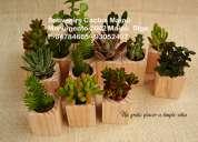 Recuerdos de matrimonio con cactus, regalos corporativos vivos