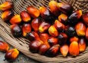 Crudo y aceite de palma refinado, aceite de maíz, soja