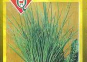 Ciboulette : ( semillas )