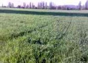 Linares venta de predios agricolas con riego,suelos de primera.campos de 10 a 60 hct
