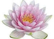 Terapias alternativas flor de loto
