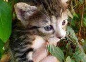 Regalo  5 gatitos hermosos