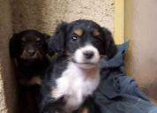 Regalo perritos, es sumamente importante regalarlos lo mas pronto posible :)