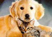 Voluntarias/voluntarios adopción y cuidado de animales.