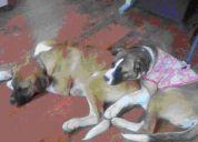 Mis perritos perdidos