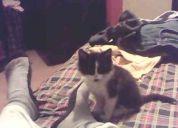 Se me extravió una gatita de 2 meses