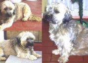 perrito perdido de nombre benji