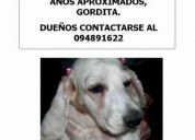 Coker encontrada