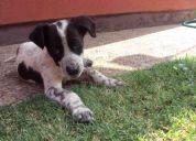 Nene busca un hogar!!! adopción de perrito!!
