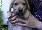 Se regalan perritos abandonados en la universidad de concepción