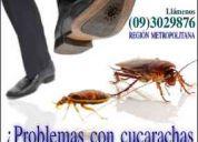 Sercon plagas - fumigaciones y control de plagas urbanas